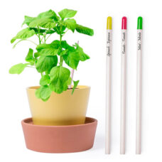 Set 3 lápices madera semillas - RGregalos